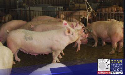 Nanawagan si Deputy Speaker Rodante Marcoleta sa Department of Agriculture (DA) na mamahagi ng hog breeders sa pork producers para masolusyunan ang kakulangan ng suplay ng baboy sa bansa.