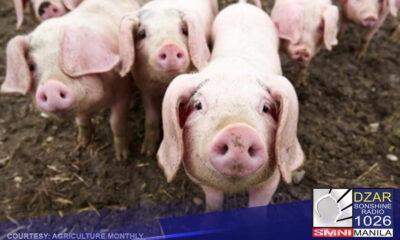 DA, puro parusa ang hatid sa hog raisers sa bansa – PPFP